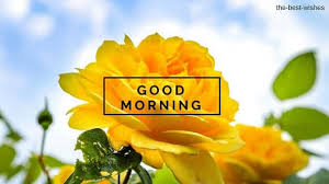 good morning wishes with yellow roses pictures