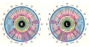 Jensen Chart A Right Iris Download Scientific Diagram
