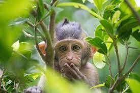 been exposed to monkeypox: CDC ...