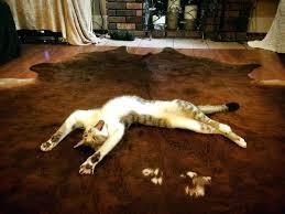 bear skin blanket bear skin rugs floor bear skin rugs no head