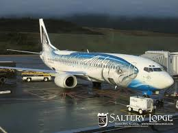 best airplane paint jobs we flew on this plane a couple