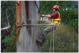 Benefits of Hiring a Tree Removal Company - Shan Civic