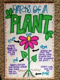 Plant Chart Parts Of A Plant Anchor Chart Science Anchor Charts