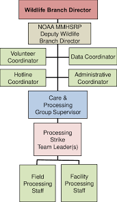Noaa Org Chart Processing Strike Team Organizational Chart Download