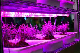 Lumina Bright Solar Lights Reviews Can I Use Led Lights For Plants Cigit Karikaturize Com