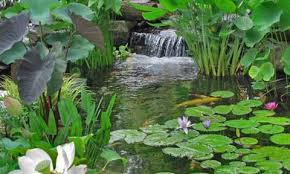 Image result for ponds