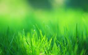 Nature Landscape Green Grass Field wallpapers Desktop Phone