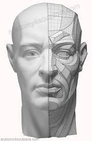 face anatomy m1 the right side is a fairly complex topographical description of