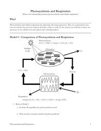 Photosynthesis-and-respiration-worksheet- & Week 15 Synthesis And ...