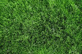 Green Grass Texture From A Soccer Field XXL Size Stock Photo