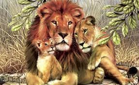 lion lions cat HD wallpaper #413289