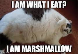 Fat Cat Meme | Your cat is so fat it doesn't even fit on the scale ... via Relatably.com