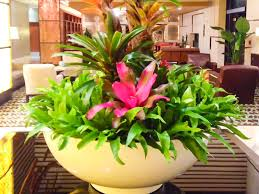 interior landscaping office. Interior Landscape Gallery Landscaping Office