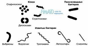 Реферат на тему Бактерии в школе net clip image006