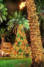 Palm Tree For Christmas  Christmas Lights DecorationChristmas Tree Hawaii