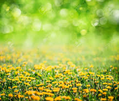 grass and flowers background. Wonderful Flowers Spring Grass And Flowers Background Stock Photo  72510663 To Grass And Flowers Background A