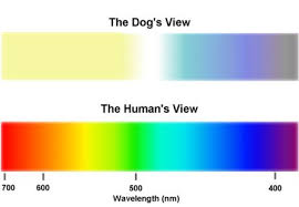 Dachshund Color Chart Can Your Dachshund See Color My Mini Doxie