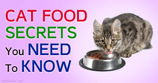 Dr Pierson A Cat Health And Nutrition Guru