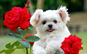 46+] Cute Puppy Pictures For Wallpaper ...