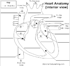 Human Blood Flow Chart Blood Flow Through The Heart Heart Diagram Heart Diagram