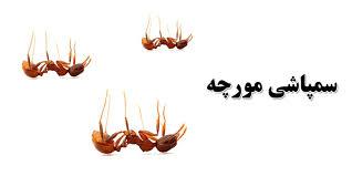 سمپاشی – شرکت سمپاشی تهران|گارانتی عودت وجه|مجوز فعالیت از وزارت بهداشت|10  سال سابقه