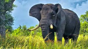 Download - Elephant 1920 X 1080 ...