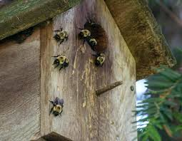 ble bees nesting in bird house carpenter bee home remedy s o remes to get rid of carpenter bees bee house plans