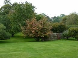 Wildflower Circle Manor House Stratford Tony