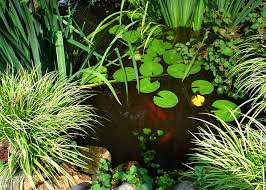 Small Picture Take Action Water Garden Designs by Tharpe