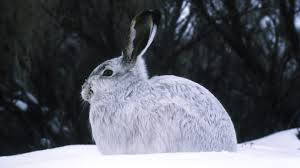 Does Cold Weather Affect Motion Lights How Does Extreme Winter Weather Affect Wildlife Cool