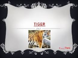 an essay on tiger for kids in english language an essay on tiger for kids in english language