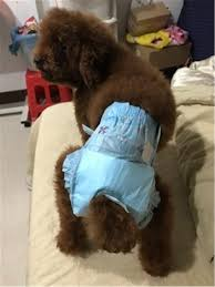 Disposable Female Dog Diapers in Heat Pads Puppy Pet liners Small to Extra Large 10pc/pack from seller Kaymark