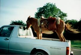 Pony riding in back of pickup truck. - Imgur