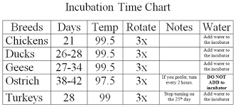 Poultry Incubation Chart Incubation Blissful Farms