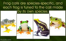 A List Of All Types Of Frogs And Toads With Amazing Pictures