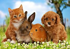 sondra buckland cute pets wp 91 2000x1400 px