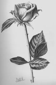 Small Picture drawing beautiful roses rose drawings rose symbol of love rose