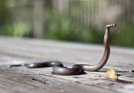 Cara ini bisa mencegah ular masuk rumah. 5 Cara Mencegah Ular Masuk Ke Dalam Rumah Tokopedia Blog