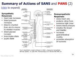Central Nervous System Vs Peripheral Nervous System Venn Diagram Sympathetic Vs Parasympathetic Venn Diagram Barca
