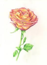 цветные рисунки для срисовки простые красивые и легкие на фото