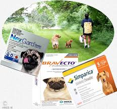 ivermectin for fleas. Brilliant For Only The Topical Form Of Bravecto Is Currently Approved For Cats To Ivermectin Fleas E
