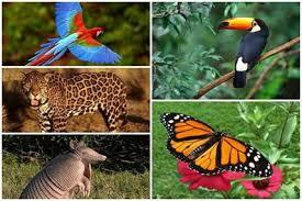 La diversidad biológica - Monografias.com