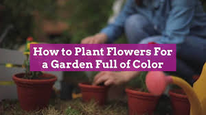 A staple of hanging containers and other planters for many years, fuchsia is a hummingbird magnet. How To Plant Flowers In 5 Easy Steps Better Homes Gardens