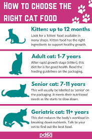 Kitten Teeth Chart The Best Diet For Your Cat Pdsa