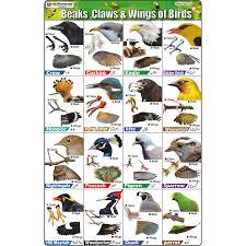Bird Beak Chart Sheet No 123 Beaks Claws And Wing Of Birds