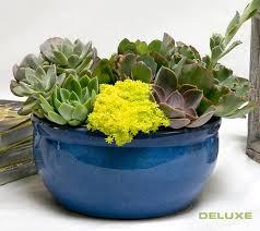 deluxe succulent garden adsgd