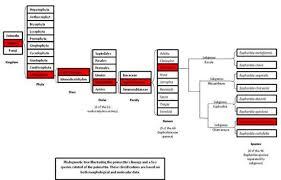 Plant Taxonomy Plant Families Chart Www Bedowntowndaytona Com