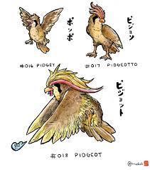 Pidgey evolution line in anime style 🦅🦅🦅🦅 : pokemon