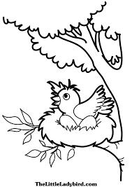 Free Bird Nest And Egg Coloring Page Thelittleladybirdcom