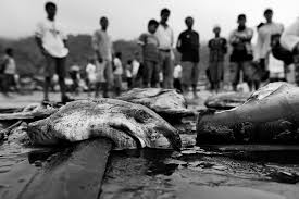 overfishing essay  essays on overfishing brainia com